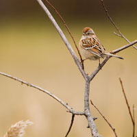 A bird perches on a twig.