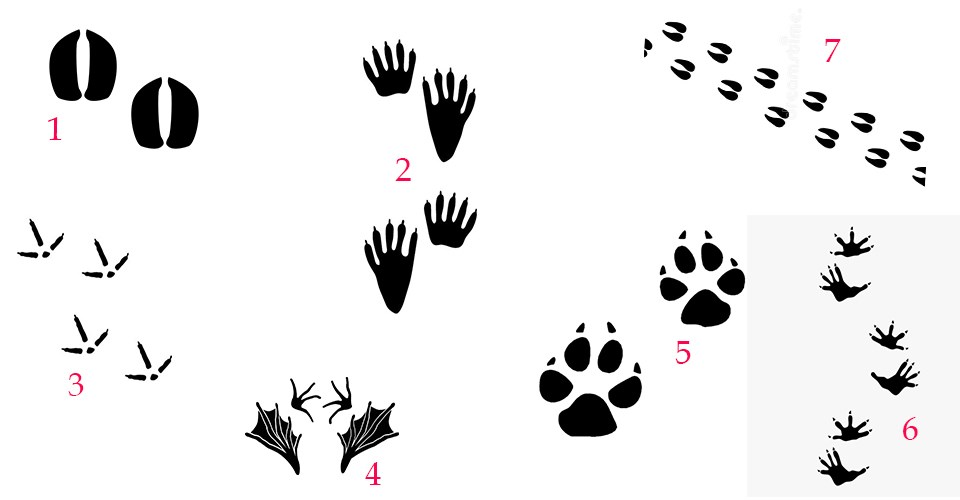 A set of seven black-colored animal tracks spread across a white background.