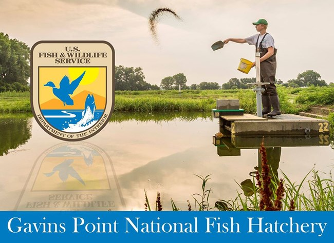 A man standing on a concrete platform throws fish food into a pool. The USFWS logo is on the left of picture.