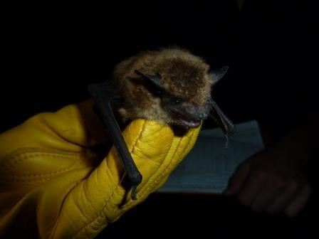 A hairy bat held by a person with a yellow leather glove.