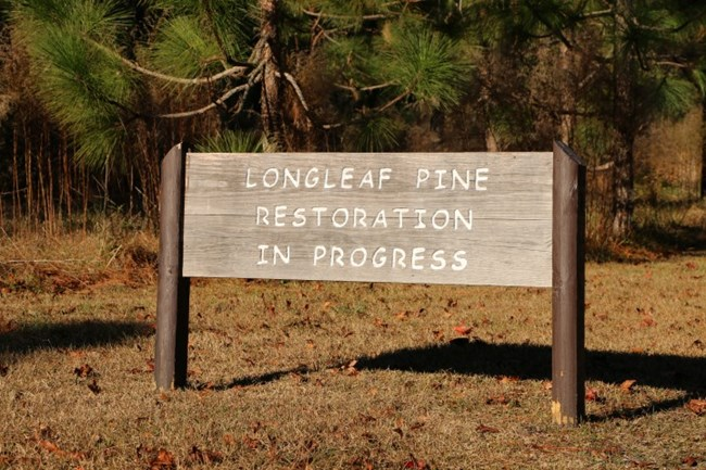 A sign at the Moores Creek fornt gate highlights the Longleaf Pine restoration project.