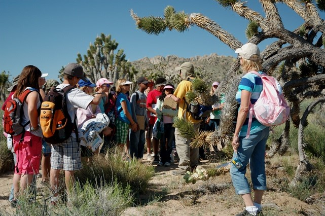 Students in Joshua tree forest