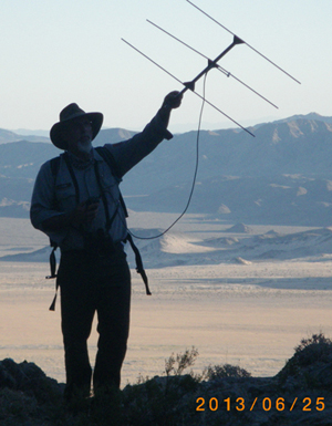 Biologist checks telemetry fitted bighorn