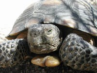 photo of tortoise