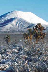 Cinder cones and Joshua trees in winter snow.