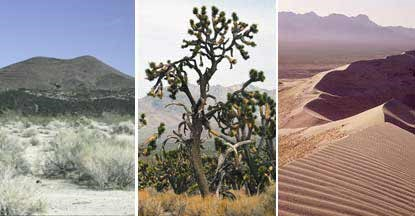 Montage of three photos of cinder cones, joshua trees, and sand dunes.