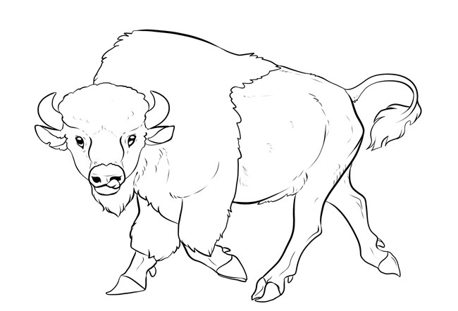 An illustration of the outline of a walking bison.