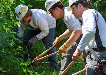 Three young men wearing hard hats and work gloves lean over clipping vegetation.