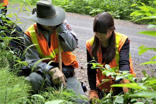 f8b7c7e68e3a62 Volunteer Opportunities - Mount Rainier National Park (U.S. National Park  Service)