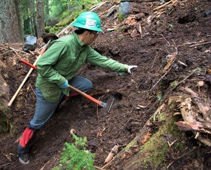 Volunteer digs out roots on a hillside.