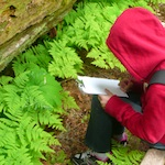 A student draws a fern while on a field trip to Mount Rainier National Park.