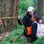 Students measure the diameter of a tree during a field experiment.