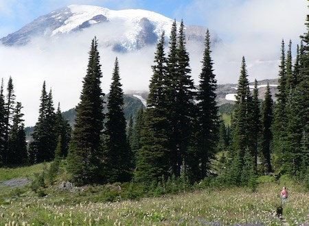 A child on a trail through a meadow with view of Mount Rainier.