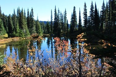 Small lake in Mount Rainier wilderness reflecting the surrounded by Subalpine Fir trees.