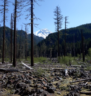 Dead trees stand in a boulder-strewn valley with the snowy peak of Mount Rainier rising above the forested hillsides at the head of the valley.