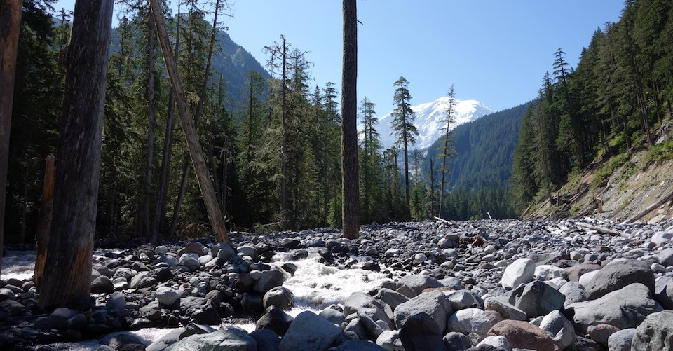 A river flows past dead trees in a wide rocky riverbed, with a distant white mountain peak above forested hillsides.