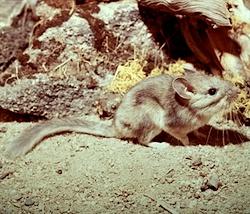 Rodents Mount Rainier National Park U S National Park