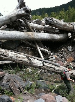 The remains of large tree trunks jumbled together after a debris flow along Kautz Creek. Park geologist for scale.