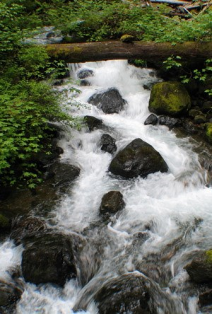 A stream flows around moss covered rocks.
