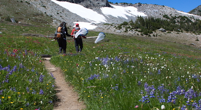 Two volunteers with butterfly nets follow a trail through a blooming wilflower meadow.