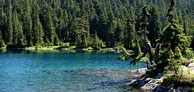 Forest surrounds the blue waters of Mowich Lake.
