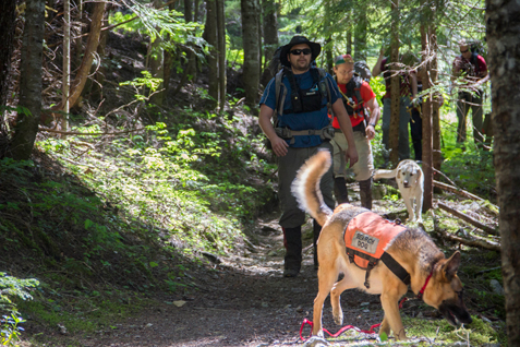 Two search dogs in vests walk along a trail with their human partners following behind.