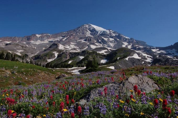 A view of Mount Rainier from Upper Van Trump Park, the foreground filled with blooming subalpine wildflowers of every color.