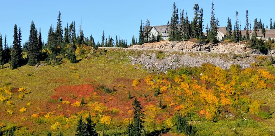 Meadow plants form a patchwork of fall colors on a valley slope beneath the Paradise Valley Road.