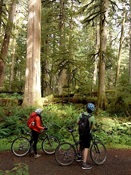 Two bicyclists stop along a gravel path to look up at tall trees in a dense forest.