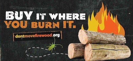 A poster produced by dontmovefirewood.org, advocating for using only local firewood to stop the spread of threatening invasive species in forests.