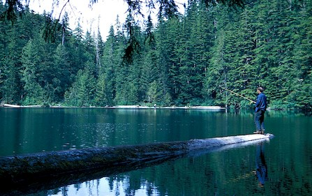 A man fishes off the end of a large tree log that extends out into the middle of a green lake surrounded by forest.