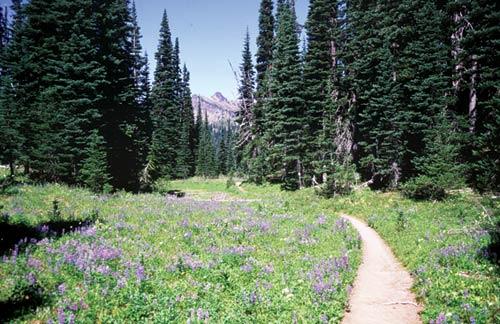 Black Hills Wild Horse Ranch Palisade-Lakes-Trail-2