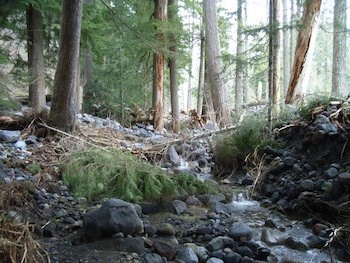 Large rocks and broken trees fill up the space between forest trees, with water still running over the rocks.