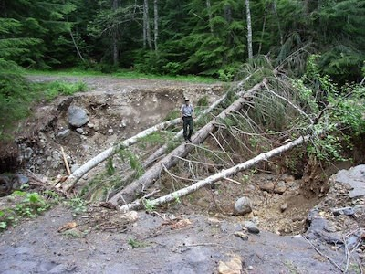 A deep ditch cuts through a road, filled with broken trees. A ranger stands on one of the tree trunks for scale.