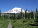One of many trails at Mount Rainier; this one to Bench and Snow Lakes.