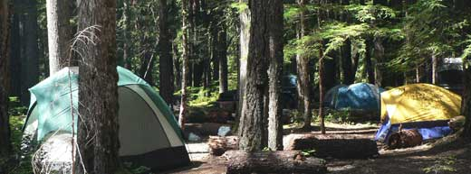 Several tents - in shades of blue, yellow, and green - are tucked between the trees in one of Mount Rainier's campgrounds.