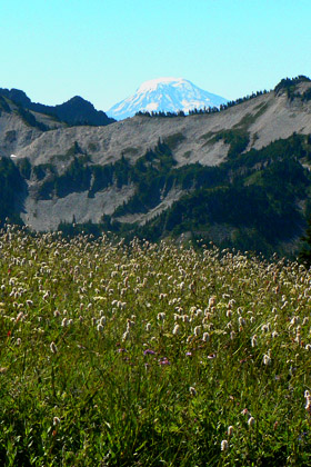 A Paradise Meadow with a view of Mount Adams in the distance.