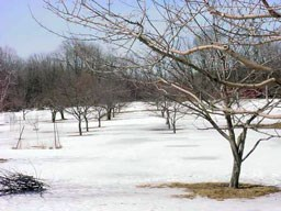 Image of the Wick Apple Orchard in the winter
