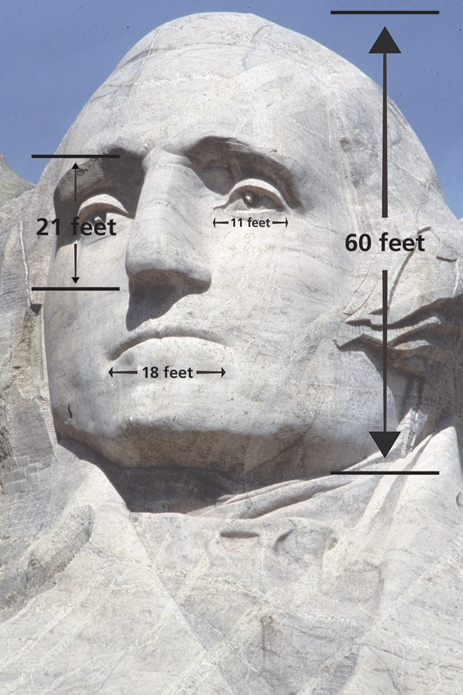 George Washington's sculpted head on Mount Rushmore:  60 feet tall with 21 foot tall nose, 18 foot wide mouth and 11 foot wide eyes.