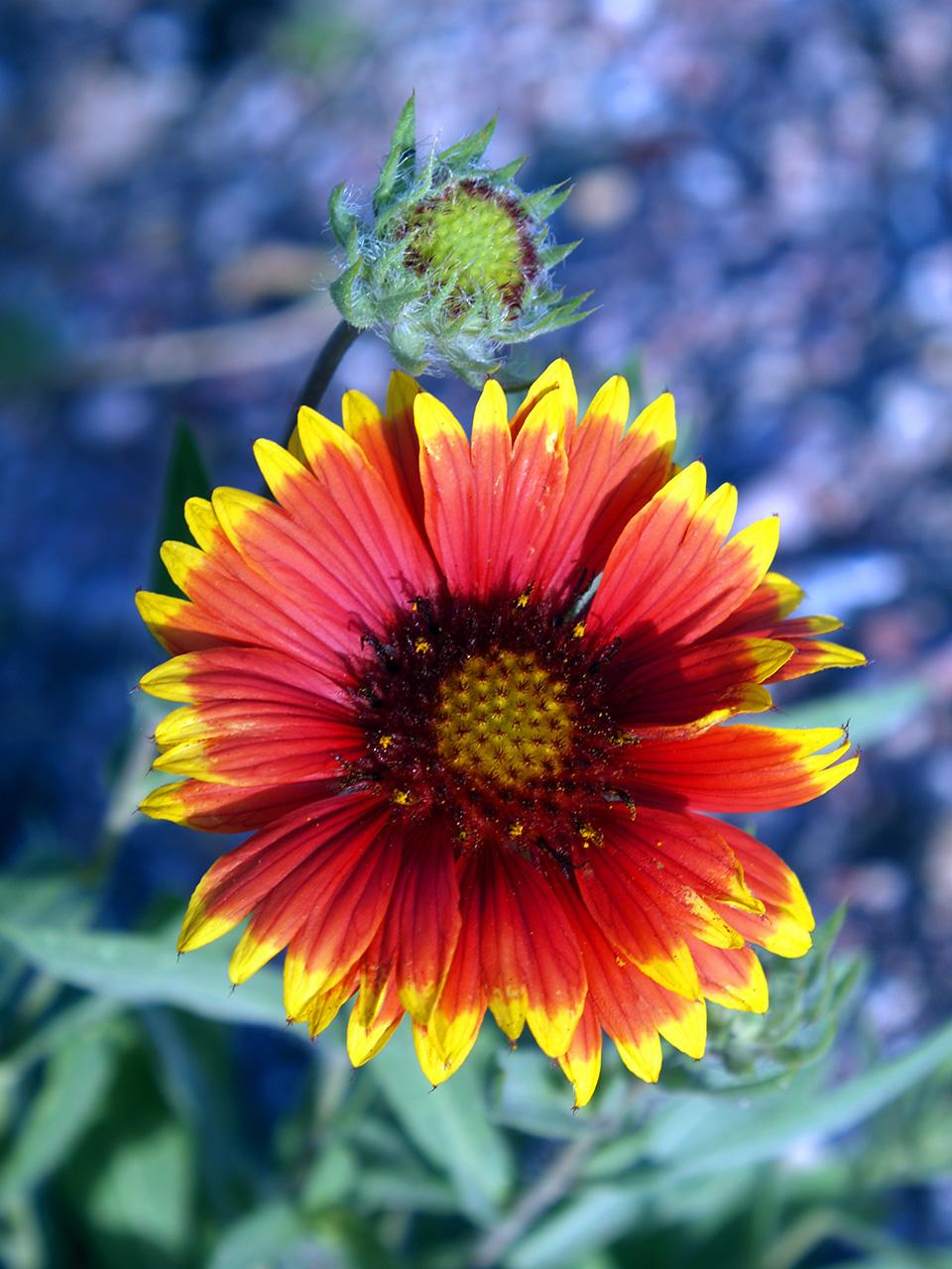 Wildflowers Mount Rushmore National Memorial Us National Park