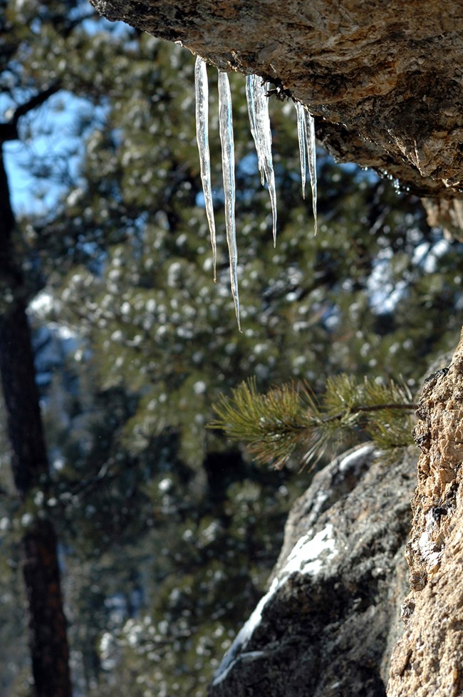 Water temporarily frozen as icicles on its way to becoming groundwater.