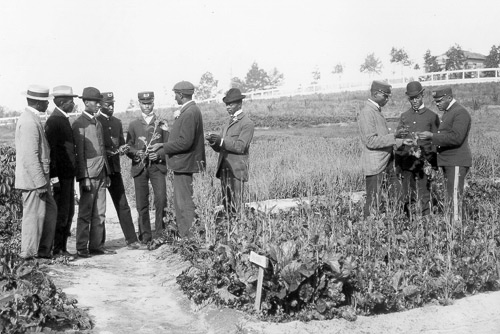 George Washington >> George Washington Carver: Field Teaching