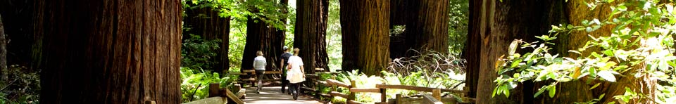 Visitors from all over the world come to explore the tranquility, beauty, and nature sounds of Muir Woods National Monument.