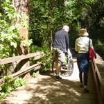 Photo of a couple walking with a friend in a wheelchair at Muir Woods.
