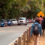 Visitors walking along Muir Woods Road with many cars parked along the opposite side of the road