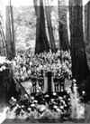 United Nations meet at Muir Woods National Monument