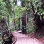 Photo of new boardwalk curving around redwood trees in Pinchot Grove, Muir Woods