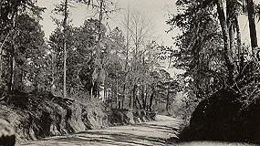 A portion of the Old Trace in Claiborne County, Mississippi, 1935.