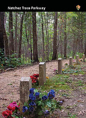 confederate gravesites trading card-6 gravesites along a gravel trail with bright flowers