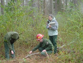 Fire effects monitoring crew analyzing a prescribed burn unit.